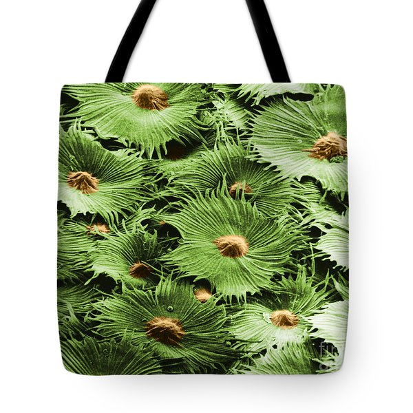 Russian Silverberry Leaf Sem Tote Bag by Asa Thoresen