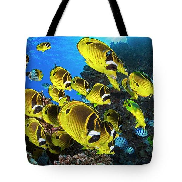Schooling Raccoon Butterflyfish Tote Bag
