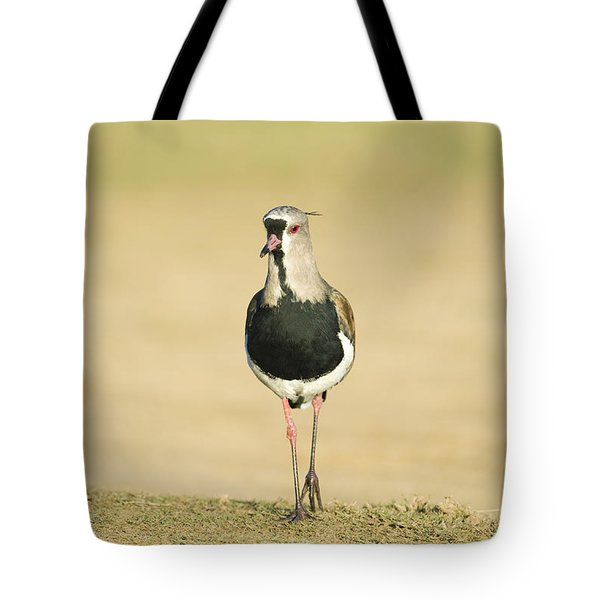 Southern Lapwing Tote Bag