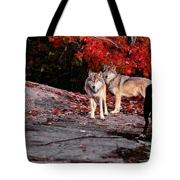 Timber Wolves Under A Red Maple Tree - Pano Tote Bag