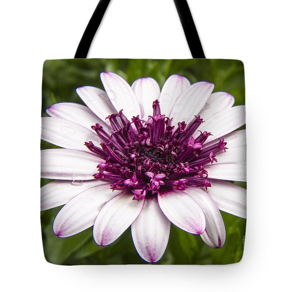 3d Berry White Cape Daisy - Osteospermum  Tote Bag by Darleen Stry
