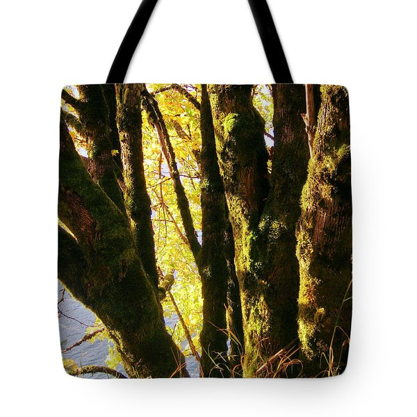Autumn 3 Tote Bag by J D Owen