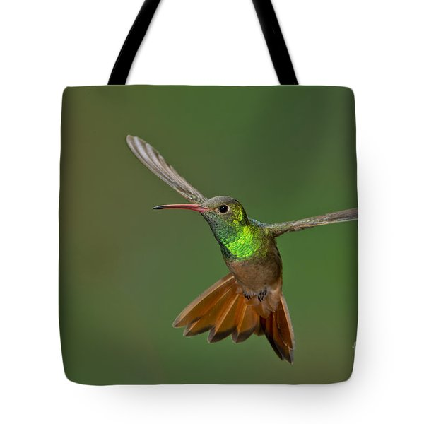 Buff-bellied Hummingbird Tote Bag by Anthony Mercieca
