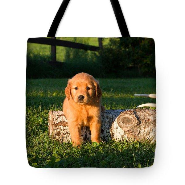 Golden Retriever Puppies Tote Bag by Linda Freshwaters Arndt