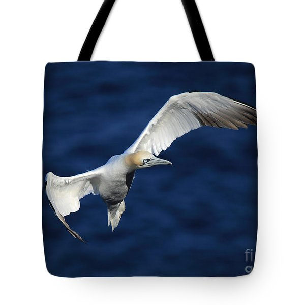 Northern Gannet In Flight Tote Bag