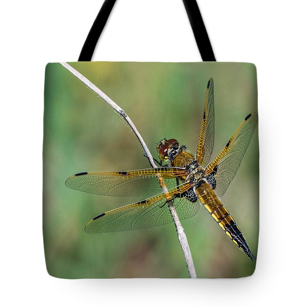 4-spotted Chaser Tote Bag