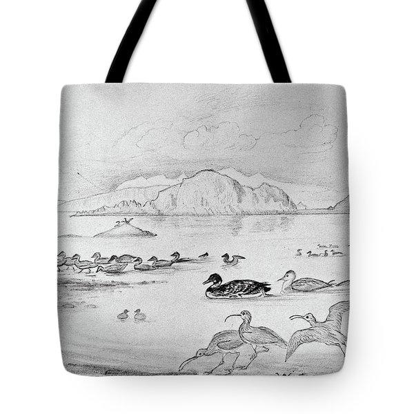 Blackburn Birds, 1895 Tote Bag