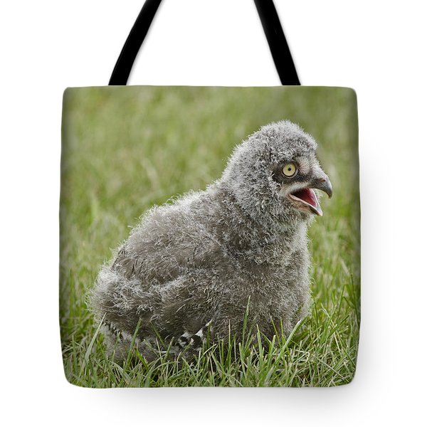 Baby Snowy Owl Tote Bag by JT Lewis