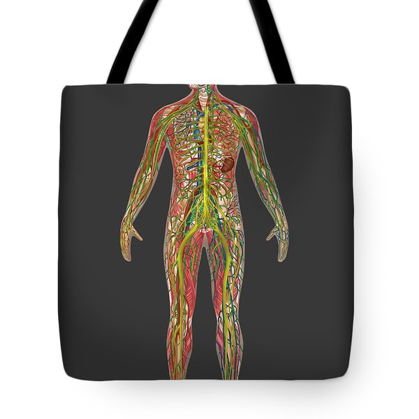 5 Body Systems In Male Anatomy Tote Bag