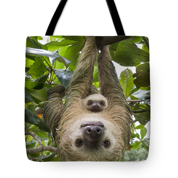 Hoffmanns Two-toed Sloth And Old Baby Tote Bag