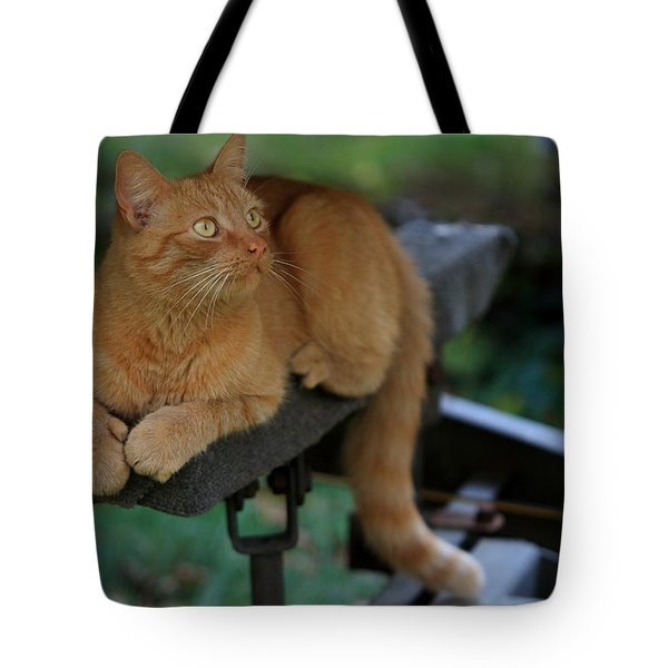 5-toe'd Orange Cat Of The Marina Tote Bag