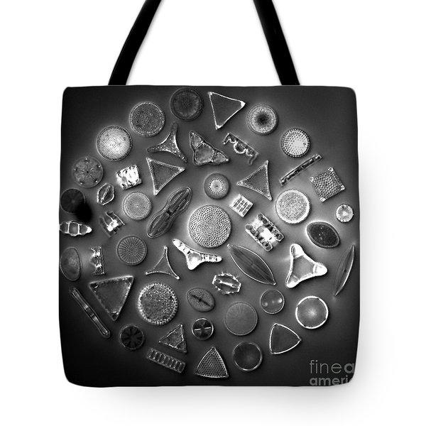 50 Diatom Species Arranged  Tote Bag by Science Source