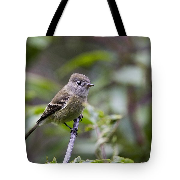 Alder Flycatcher Tote Bag