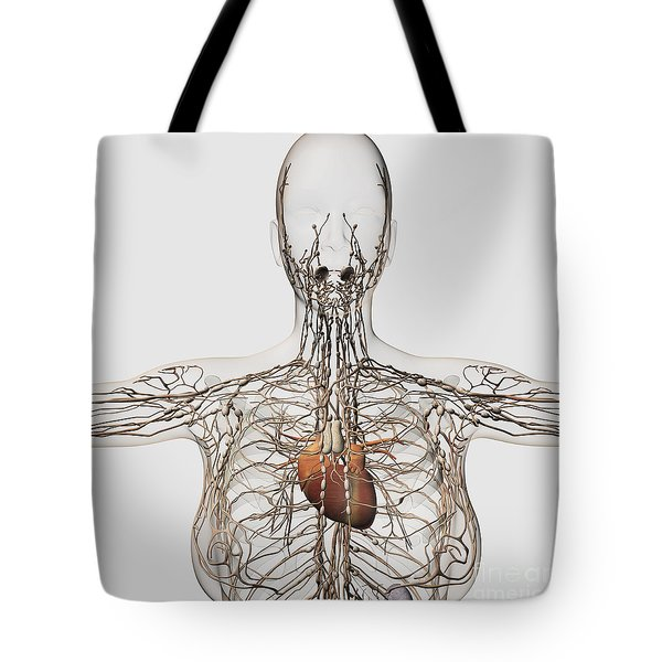 Medical Illustration Of Female Tote Bag by Stocktrek Images