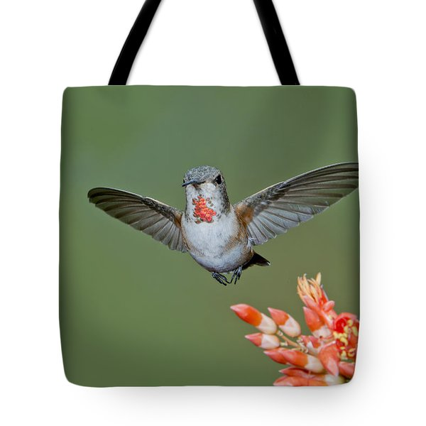 Rufous Hummingbird Tote Bag