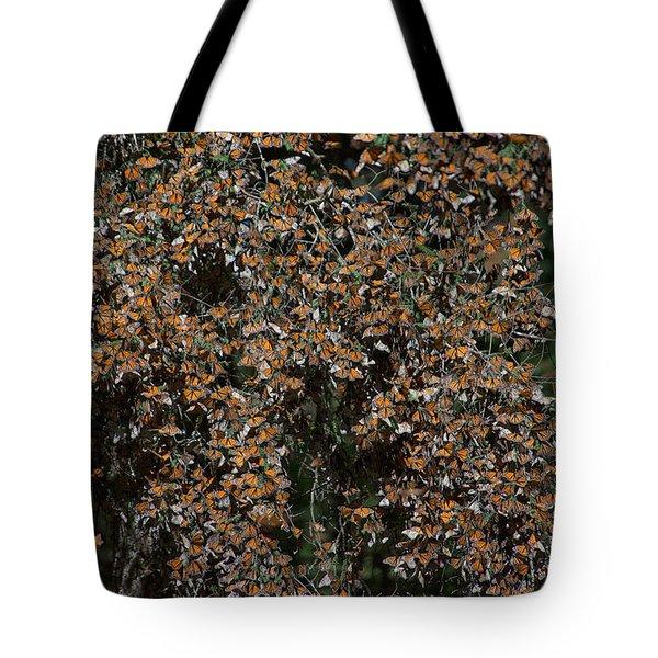 Monarch Butterflies Tote Bag