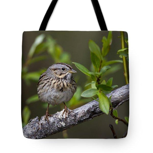 Lincolns Sparrow Tote Bag