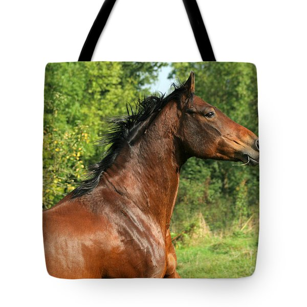 The Bay Horse Tote Bag by Angel  Tarantella