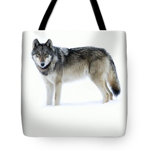 820f Of The Lamar Canyon Pack Tote Bag