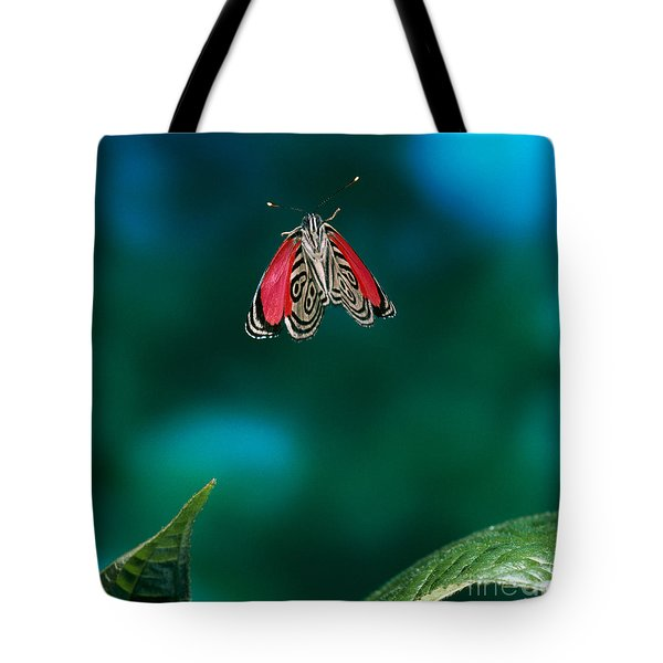 89 Butterfly In Flight Tote Bag by Stephen Dalton