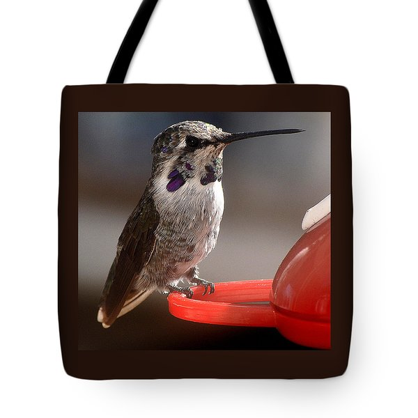 Tote Bag featuring the photograph Female Anna's Sitting On Perch by Jay Milo