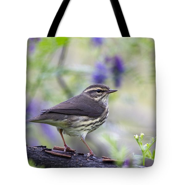 Northern Waterthrush Tote Bag