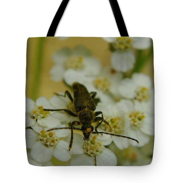 A Beattle Tote Bag by Jeff Swan