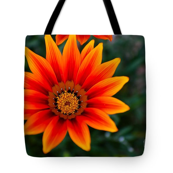 A Beautiful Beginning Tote Bag by Syed Aqueel