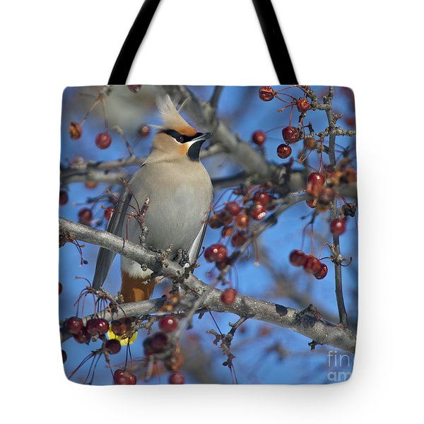 A Bird For Its Crest.. Tote Bag by Nina Stavlund