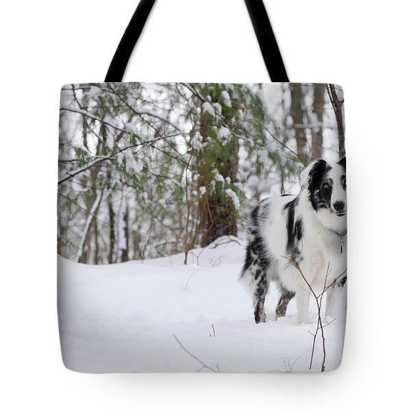 A Black And White Australian Shepherd Tote Bag