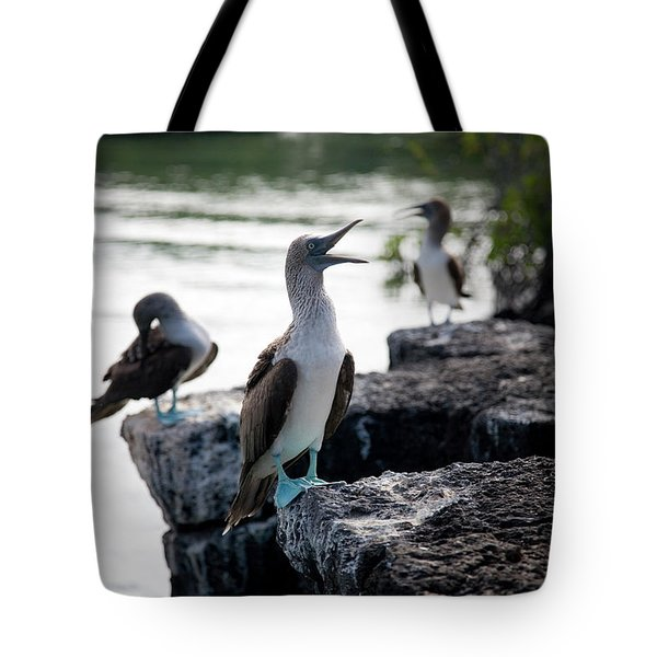 A Blue Footed Boobie Sula Nebouxii Tote Bag