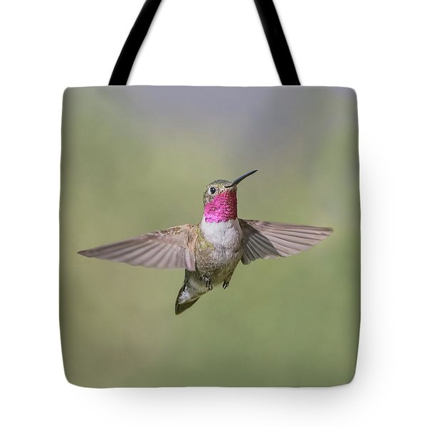 A Broad-tailed Hummingbird Hovers Tote Bag