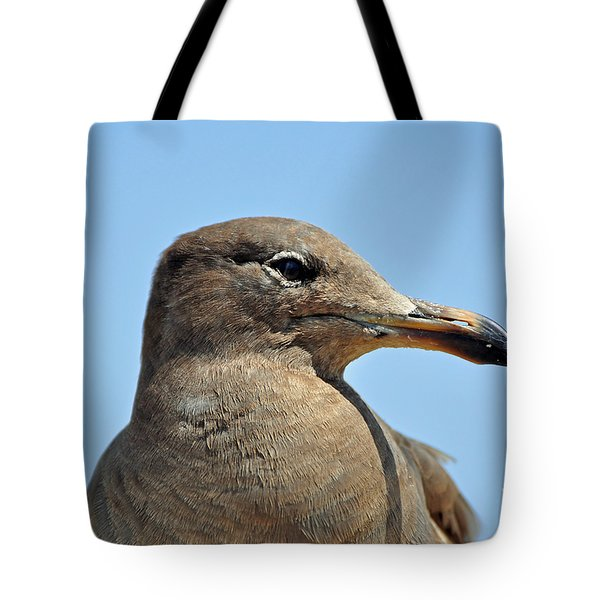 A Brown Gull In Profile Tote Bag