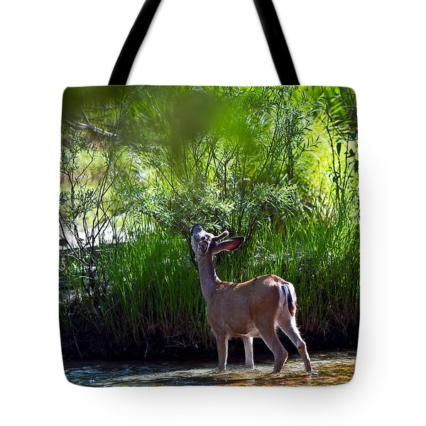 Tote Bag featuring the photograph A Buck Feeding by Brian Williamson