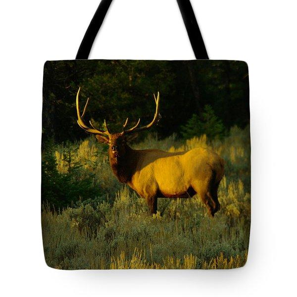 A Bull Elk In The Morning Tote Bag