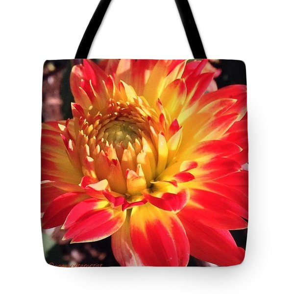 A Burst Of Fall Color Tote Bag