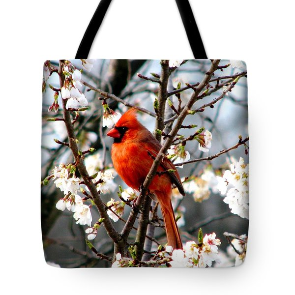A Cardinal In The Apple Blossoms Tote Bag