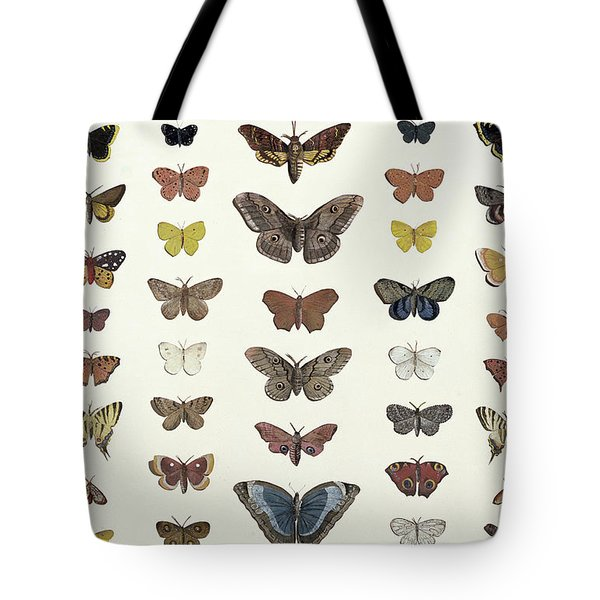 A Collage Of Butterflies And Moths Tote Bag by French School