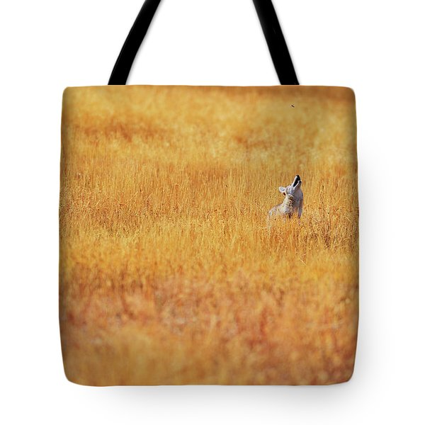A Coyote Hunting Insects In A Golden Tote Bag