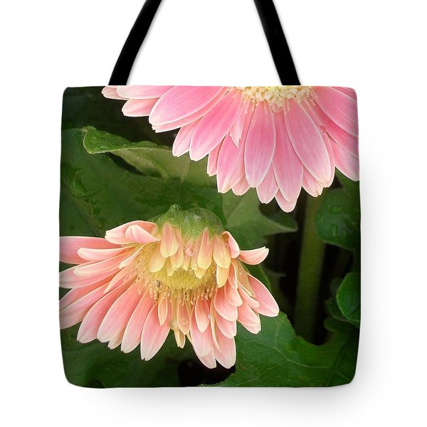A Curtsy Tote Bag