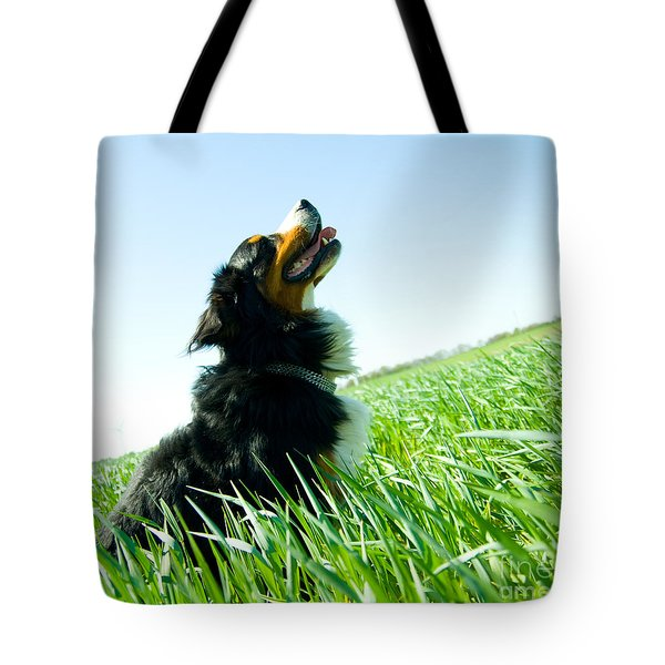 A Cute Dog On The Field Tote Bag
