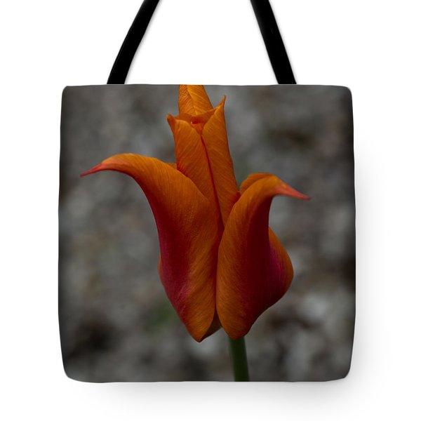 A Flamboyant Flame Tulip In A Pebble Garden Tote Bag by Georgia Mizuleva