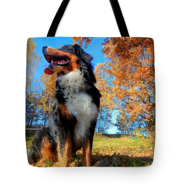 A Happy Bernese Mountain Dog Outdoors Tote Bag by Michal Bednarek