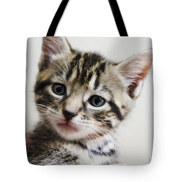 A Kittens Helping Hand Tote Bag