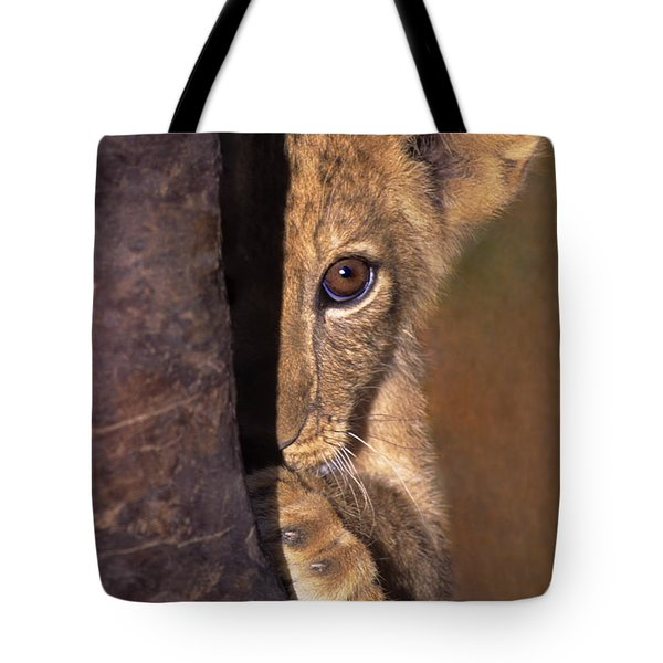 Tote Bag featuring the photograph A Lion Cub Plays Hide And Seek Wildlife Rescue by Dave Welling