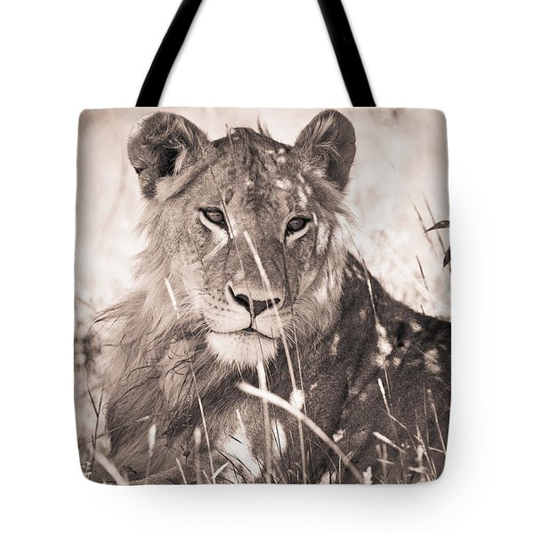 A Lioness Lays In The Shade Kenya Tote Bag by David DuChemin