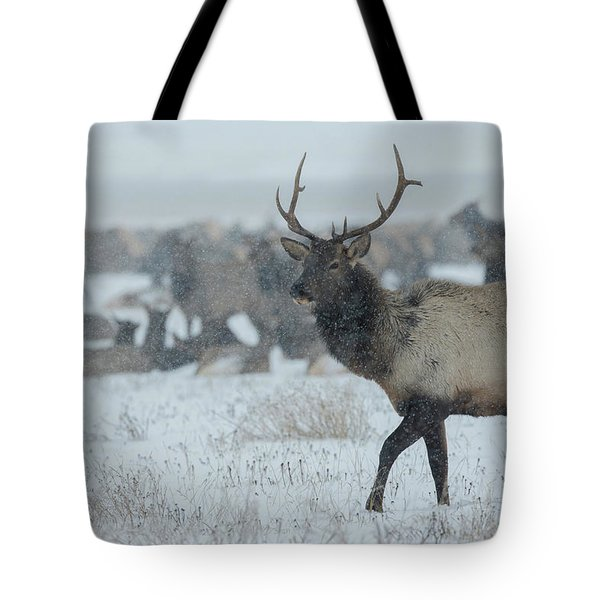 A Male Elk In The 24,700-acre National Tote Bag