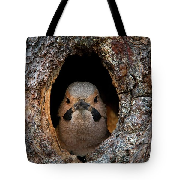 A Northern Flicker In The Hollow Tote Bag