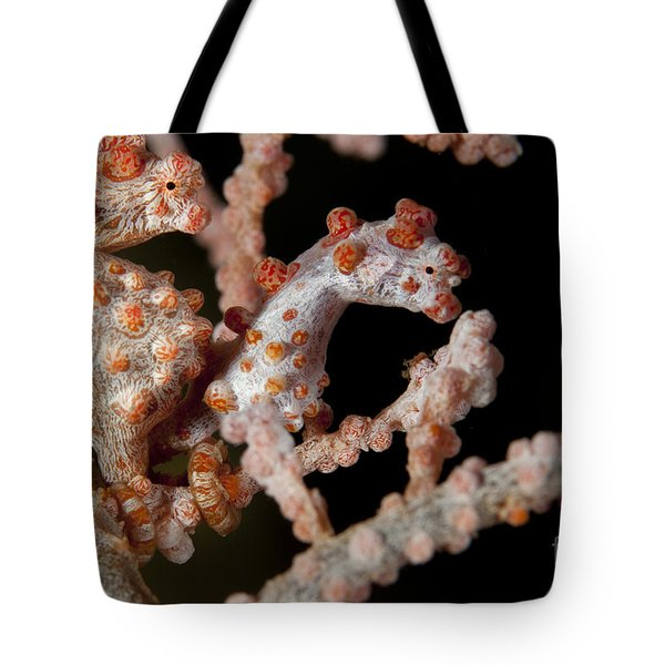 A Pair Of Pygmy Seahorse On Sea Fan Tote Bag by Steve Jones