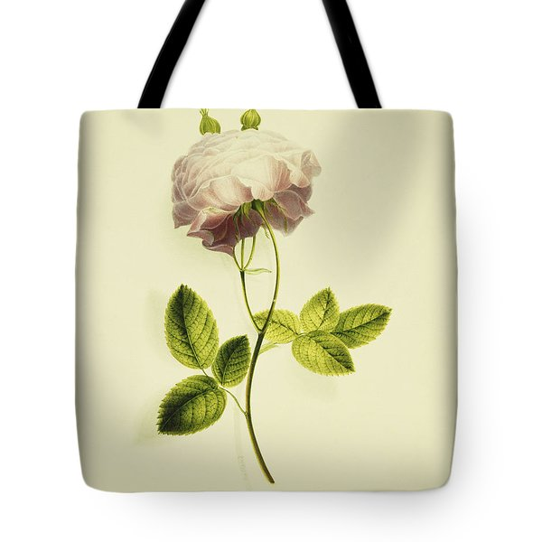 A Pink Rose Tote Bag by James Holland